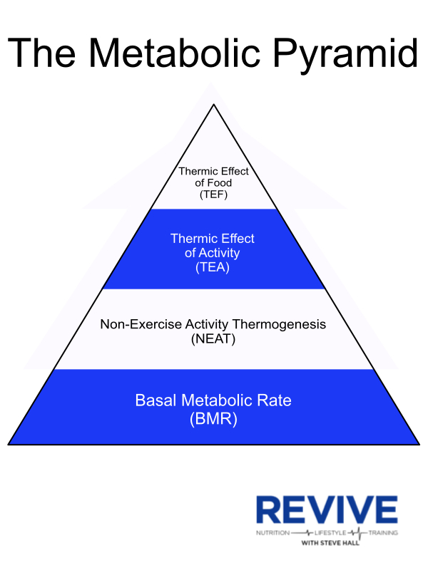 Metabolic Pyramid